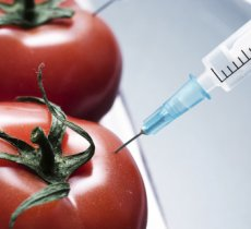 A fairly (un)educated look into PROs and CONs of GMOs