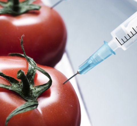 Gmo pros and cons